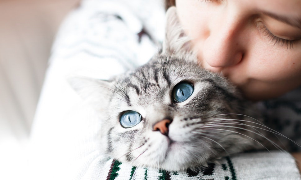 Things Many Cat Lovers Missed from Feline Infectious Peritonitis