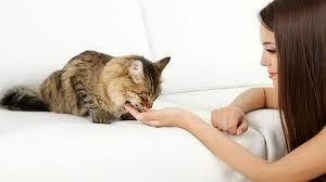 5 Tips Untuk Pemula Merawat Kucing Tanpa Kandang