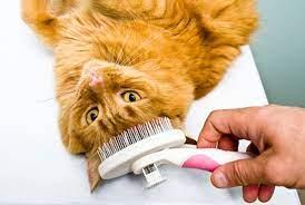 7 Tips Merawat Bulu Kucing Agar Sehat dan Tidak Mudah Rontok