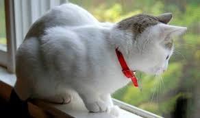 Tips Agar Kucing Betah Berada di Rumah