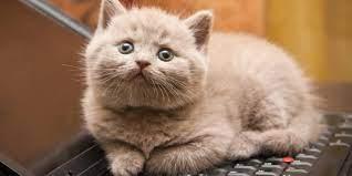 Hal yang tidak disukai kucing, Anda perlu tahu