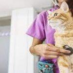 Ketahui 6 Penyakit yang Rentan Dialami Kucing Peliharaan