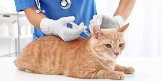Mengapa Vaksin Penting untuk Diberikan pada Kucing?