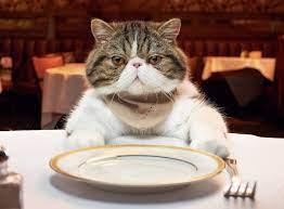 Tips Memberi Makan Kucing Agar Gemuk dan Sehat Maksimal