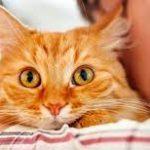 8 Hal Paling Disukai Kucing Peliharaan Yang Harus Kalian Tahu