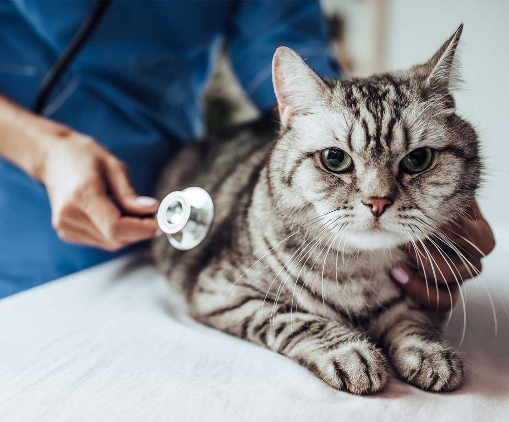 Cegah Kecanduan Judi Online Ternyata Mirip dengan Pencegahan FIP pada Kucing