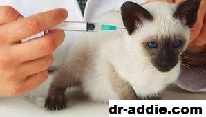 Penyakit Sporo Buat Pemilik kucing Cemas