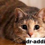 Penyakit yang Dapat Ditularkan Kucing pada Manusia